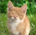 cat no eyes